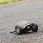Vídeo: Salvan la vida a su tortuga con un curioso implante