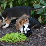 """Nace la primera camada de perros por fecundación """"in vitro"""""""