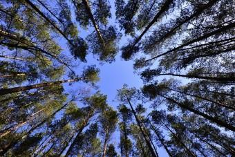 bosques cambio climático