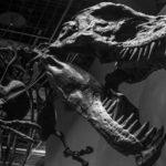 Un estudio rediseña el árbol genealógico de los dinosaurios