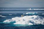 Deshielo antártico: El nivel del mar aumenta 8 milímetros en 25 años