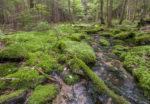 Restauración de espacios naturales, clave contra el calentamiento global