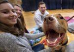Acariciar perros y gatos alivia el estrés, según un estudio